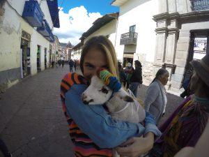 Chevre Cuzco Perou