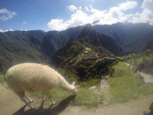 Machu Picchu Perou