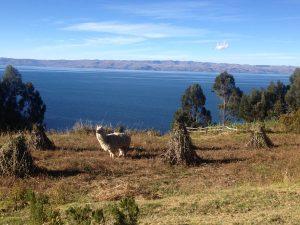 Isla del Sol Lac Titicaca Perou Bolivie Copacabana